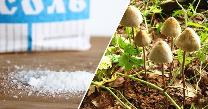Натуральные продукты, которые могут оказаться опасными.
