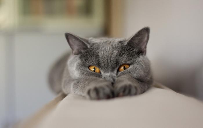 Умные кошки для умных людей.
