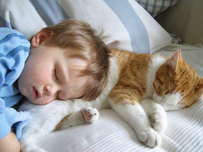 С кошкой и сон приятнее.