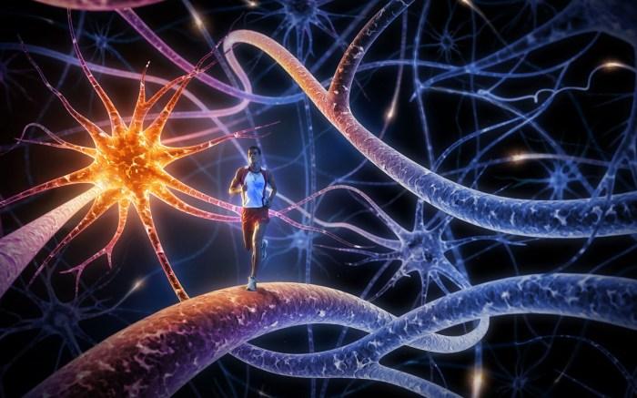 Мозг и печень работают в связке.