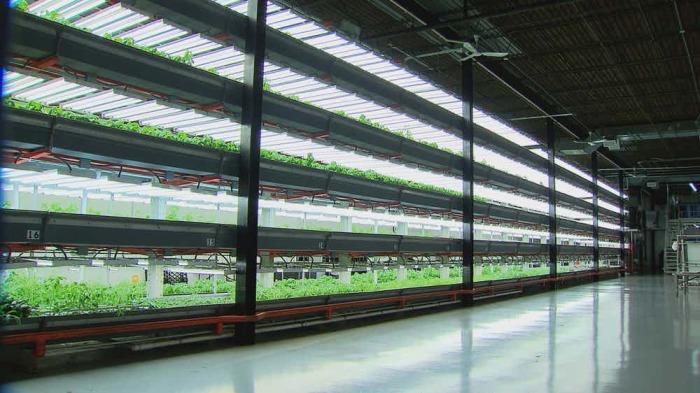 Вертикальные фермы - наше всё.