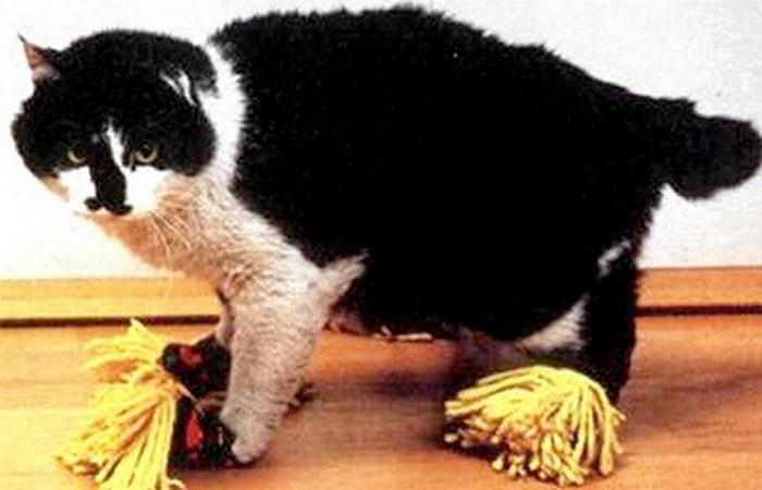 Нелепый гаджет: тапочки для кошки.