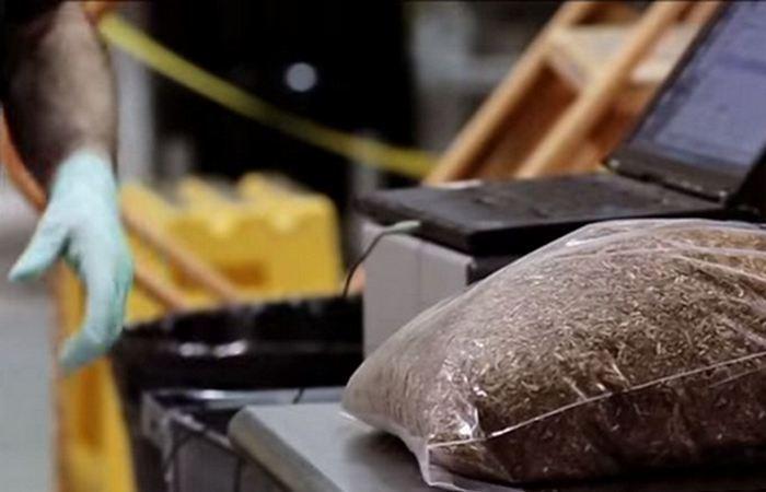 Аналог пластика из грибов.