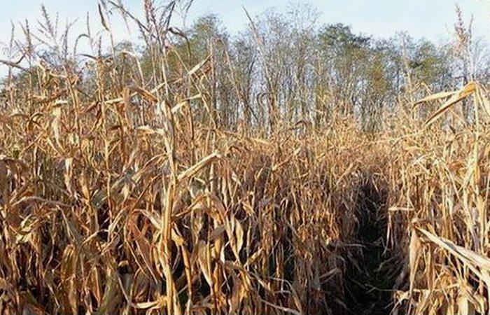 Аналог пластика из кукурузы.