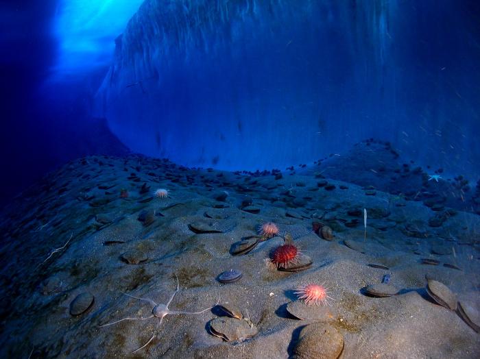 В берегов Антарктиды был обнаружен подводный вулкан.