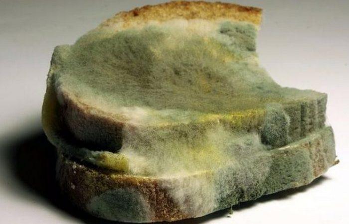 Антибиотики в заплесневелом хлебе.