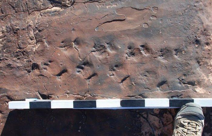 Следы древней рептилии Chelichnus gigas в Неваде.