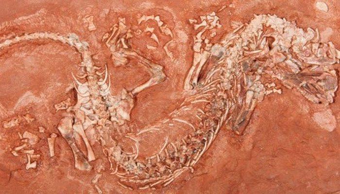 Окаменелая рептилия каменноугольного периода.