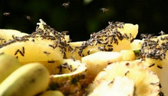 Банановая кожура поможет с избавлением от плодовых мушек.