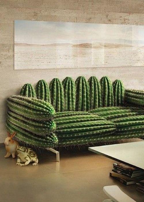Самый мягкий кактус в мире.