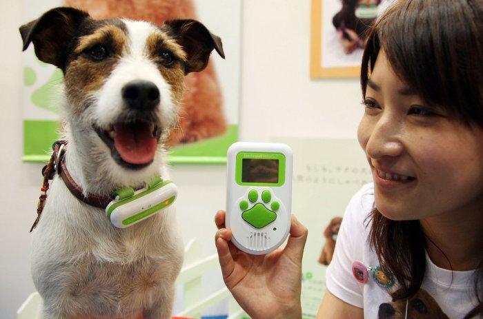 Собачий переводчик и другие собачьи полезности.