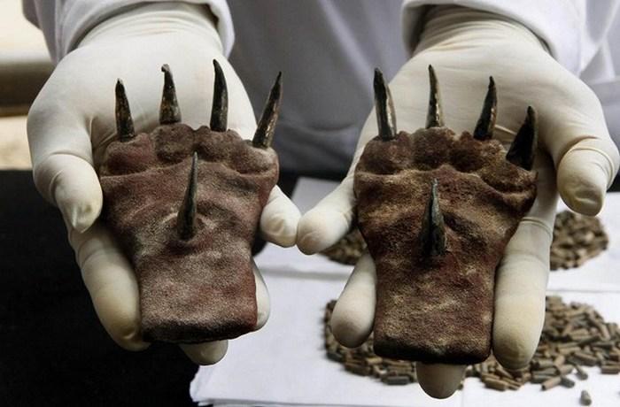Необычные металлические кошачьи когти.
