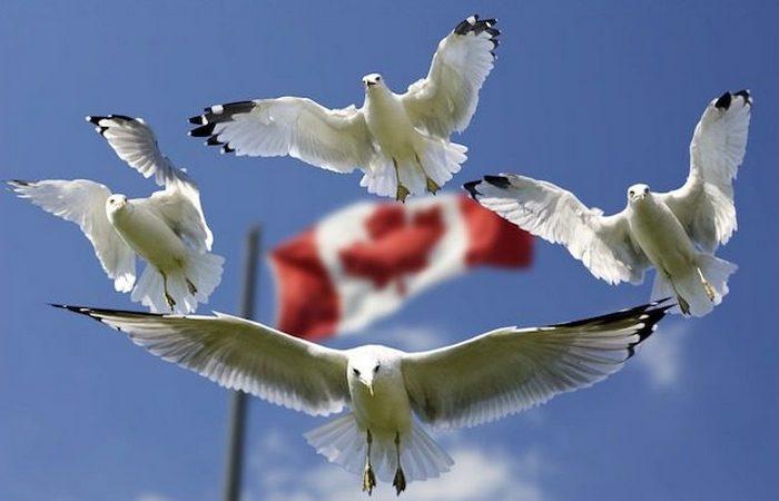 Гостеприимная Канада.