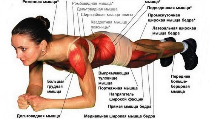 О мышцах подробнее...