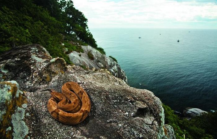 Экстремальное место: остров Кеймада-Гранди.