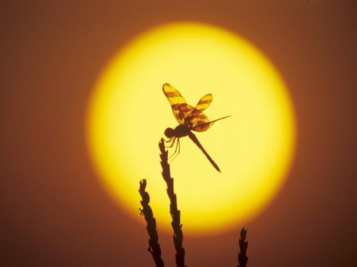 Есть ли жизнь на солнце?