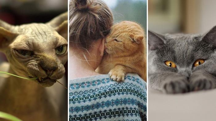 Без кота жизнь не та.
