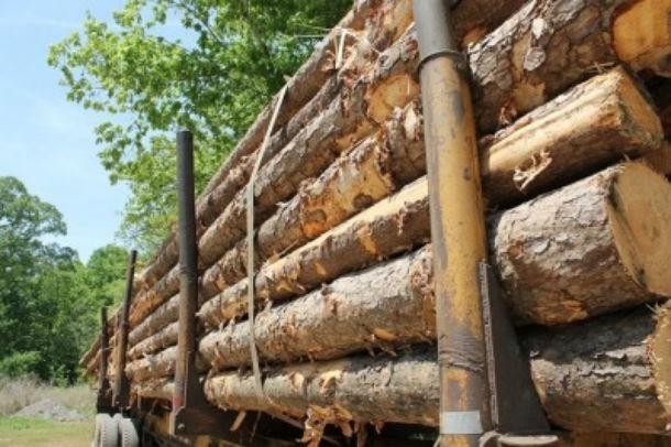 1% мировой древесины для IKEA.