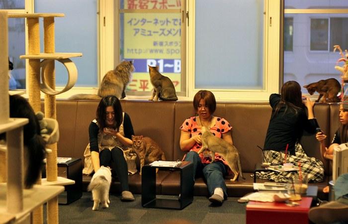 Кафе с кошками.