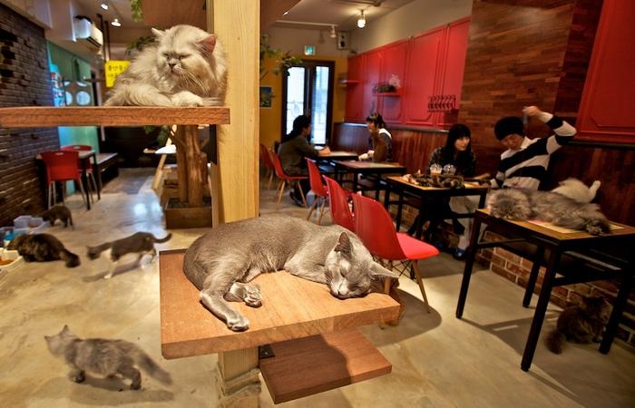 В Японии можно сходить в кафе для кошек.