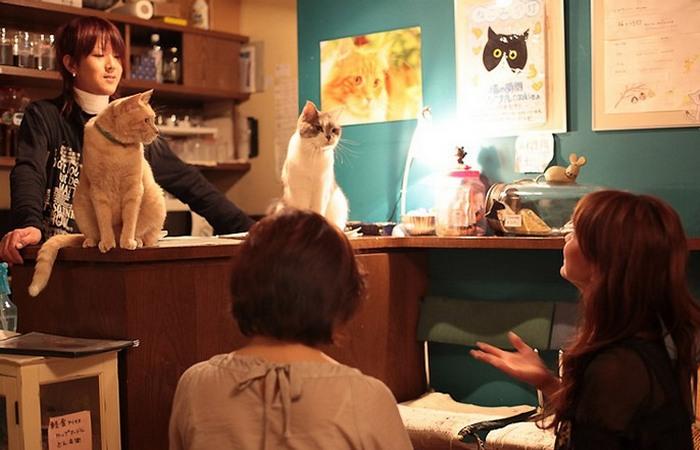 Кофе и кошку пожалуйста...