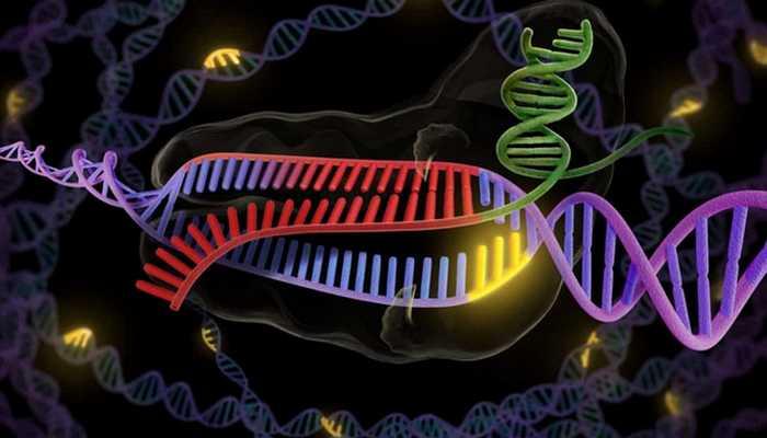 Японское изобретение: «CRISPR».