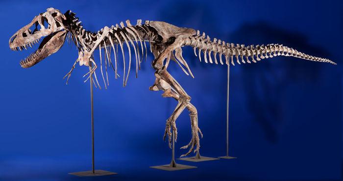 Тиранозавр Батор.
