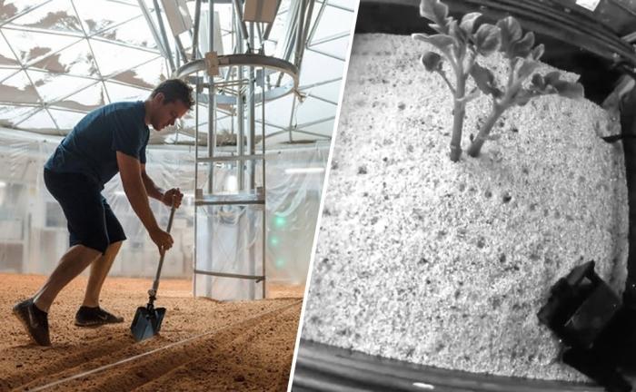 «Марсианский» картофель демонстрирует многообещающие результаты