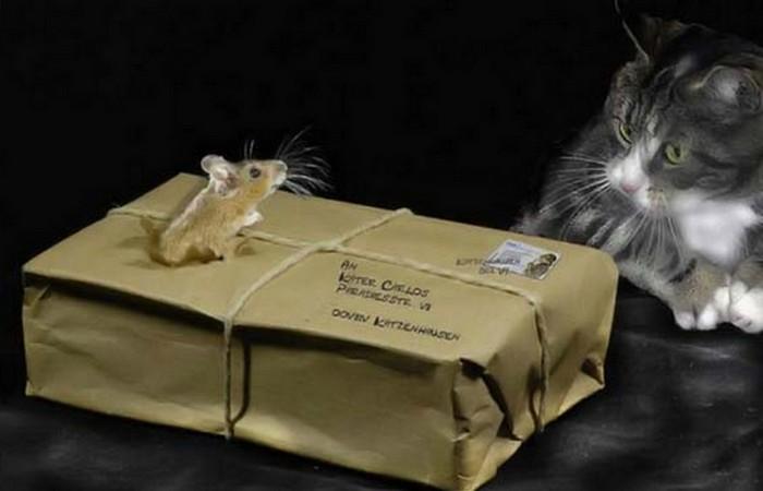 Кошки-мышки на почте.