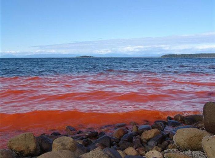 Красный прилив - жуткое зрелище.
