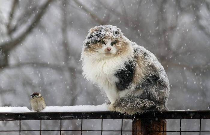 Интересный факт: снег, лёд, град - формы дождя.