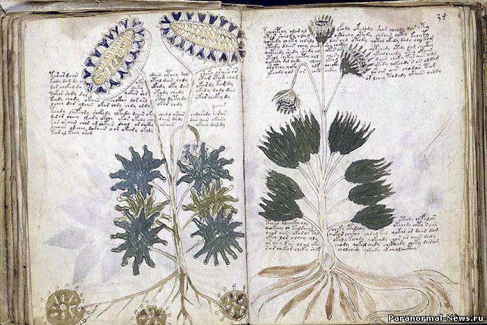 Рукопись Войнича