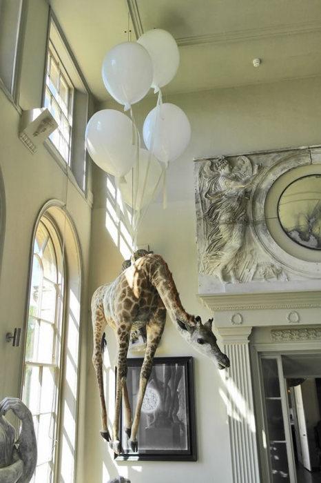 Парящее чучело жирафа.