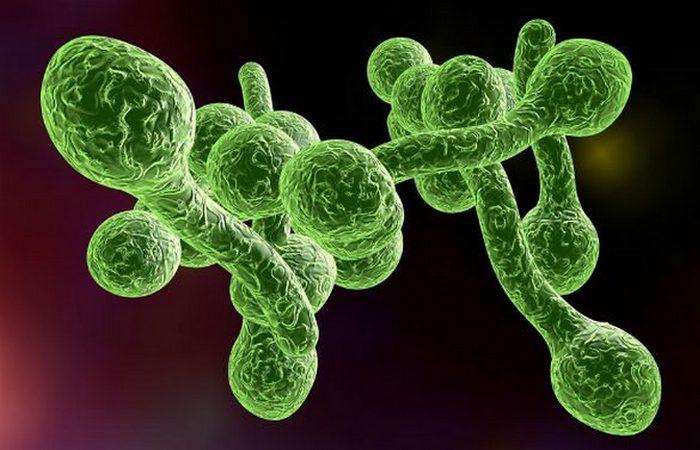 Месяц без душа: увеличится риск заражения стафилококком.