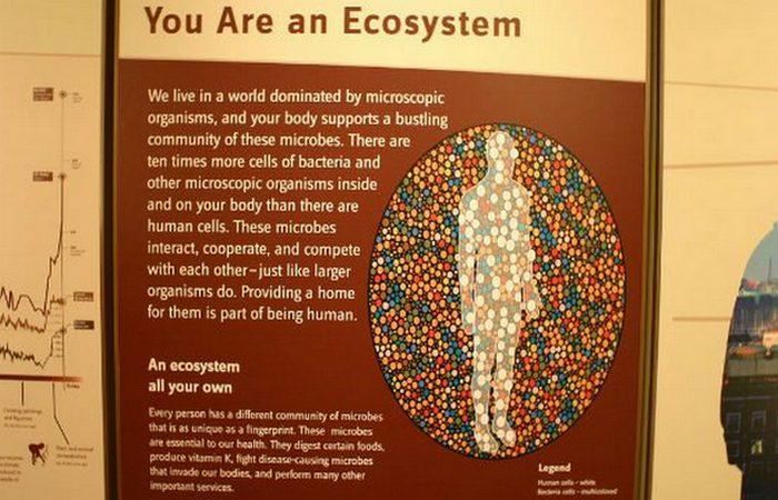 Месяц без душа: поизойдет разбалансировка личной экосистемы.