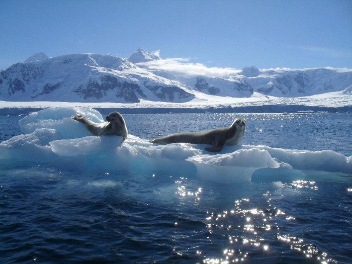 Эта удивительная Антарктида.