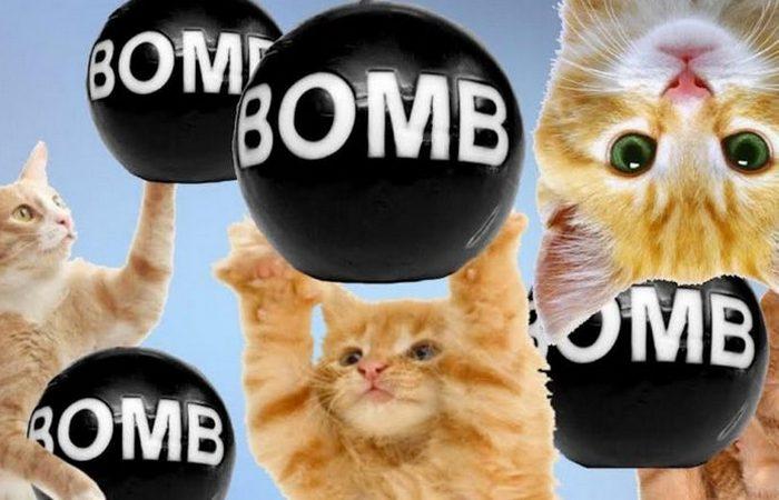 Совершенно секретно: коты-бомбы Второй мировой войны.