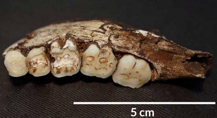Износ зубов позволяет учёным узнать, чем питался древний человек.
