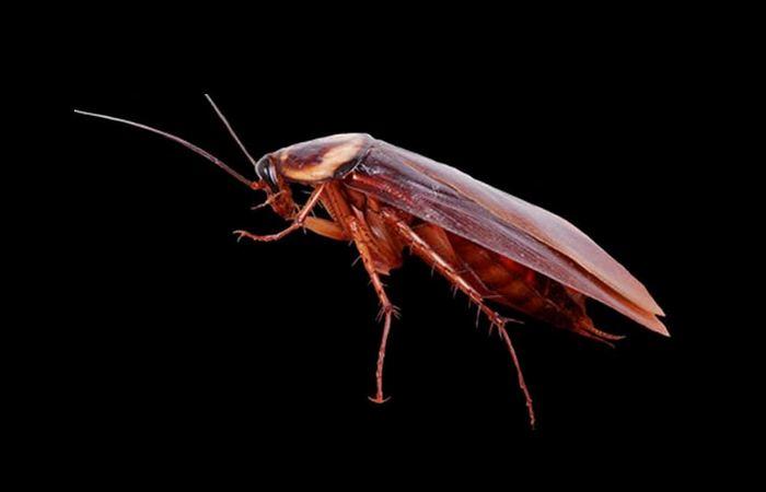 У Вас тут в черепе живой таракан притаился...