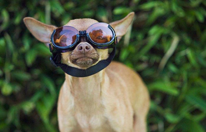 Странно, но прибыльно: чки для собак «Doggles».