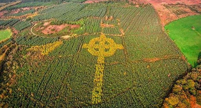 100-метровый кельтский крест в лесу в Ирландии.