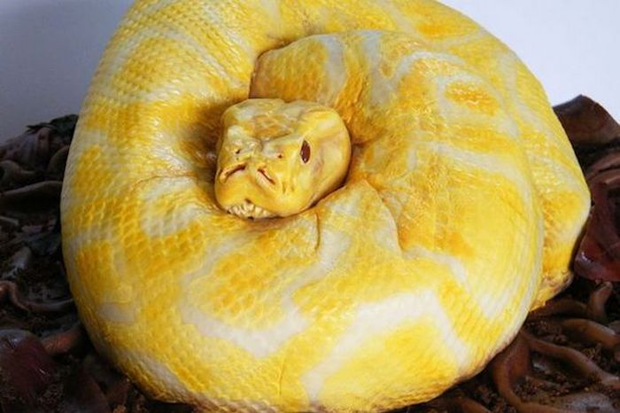 Торт-змея.