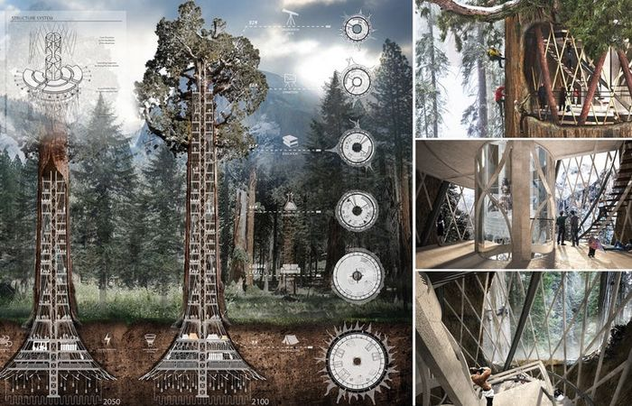 Дом внутри ствола мамонтового дерева.