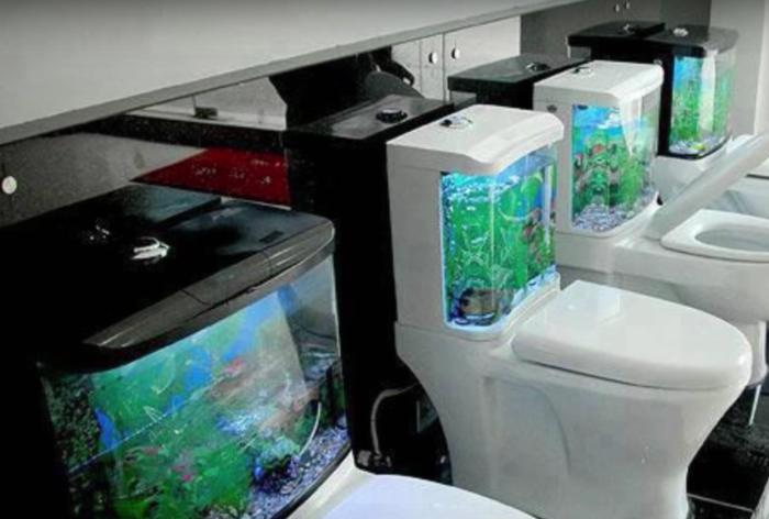 Унитаз-аквариум.