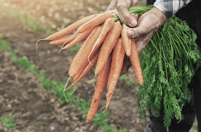 И в морковке можно найти кольцо, если очень повезёт.