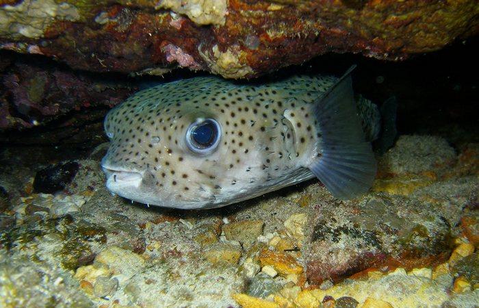 Скрыты под водой «Морские круги».