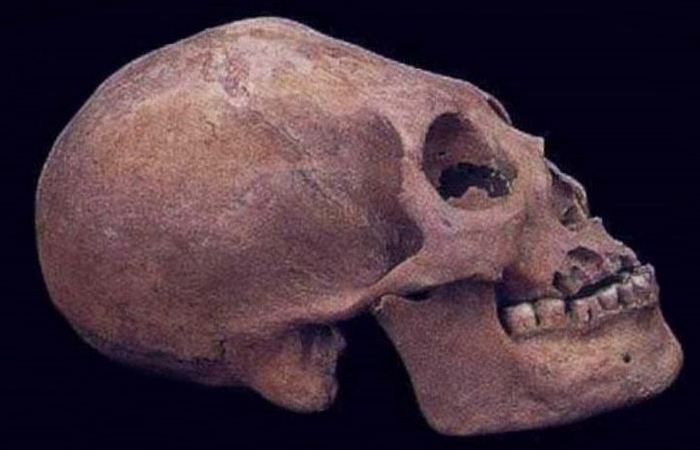 Были скрыты под водой удлиненные черепа.