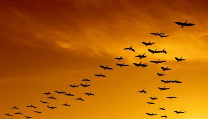 Уникальные возможности птиц.