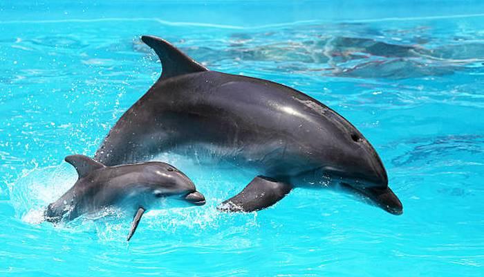 Уникальные возможности дельфинов.