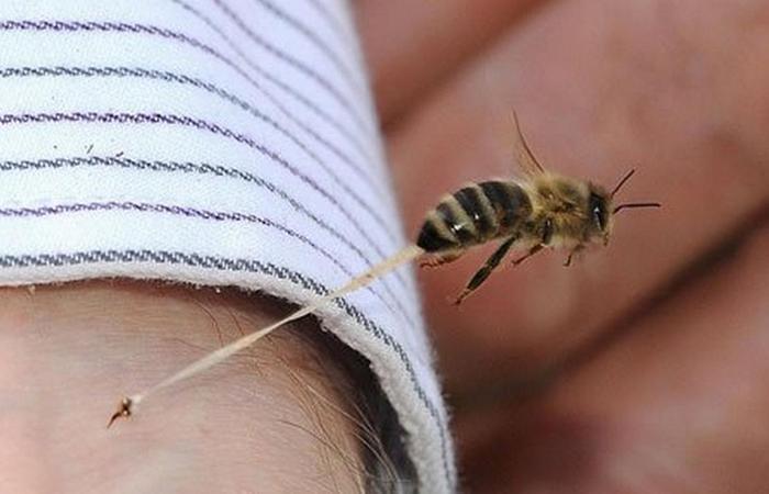 Полезный совет: кредитка поможет при пчелиных укусах.